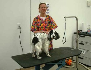 A1 bed and Biscuit Building Grooming 300x232 Dog and Cat Grooming